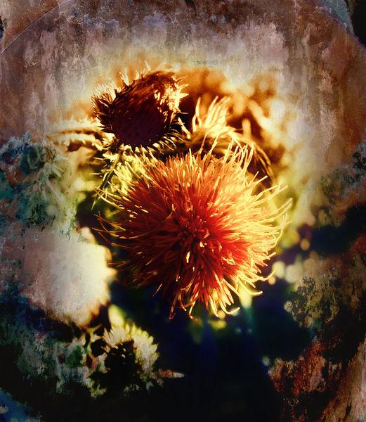 Fotografie, Sonnenuntergang, Farben, Kontrast, Wild flower, Blumen