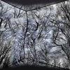 Energie, Natur, Schatten, Baum