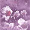 Surreal, Narcissuses, Blumen, Licht