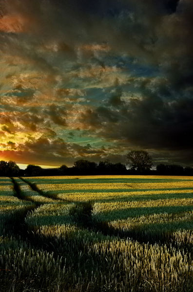 Sonnenuntergang, Romantisch, Kontrast, Glühen, Gelb, Orange