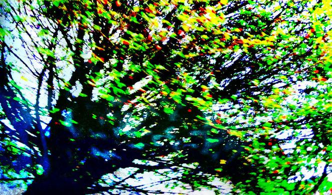 Baum, Puchheim, Abstrakt, Laub, Inclined, Natur