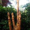 Stamm, Holz, Wurzel, Kunsthandwerk