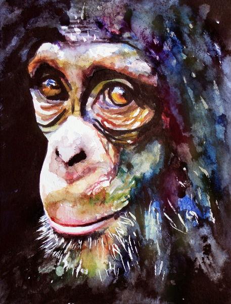 Affe, Ausdruck, Chimp, Schimpanse, Blick, Aquarell