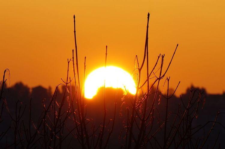 Sonne, Winter, Zweig, Fotografie