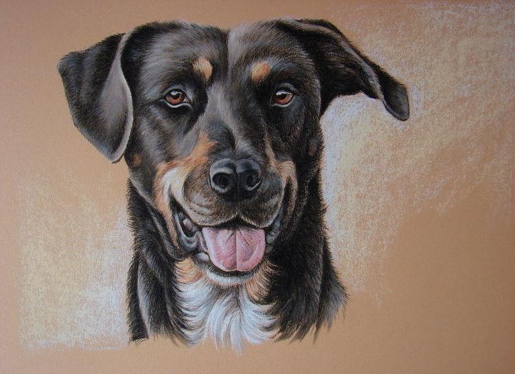 Tierportrait, Tierzeichnung, Hund, Tiere, Zeichnungen, Amy