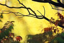 Äste, Gelb, Landschaft, Herbst