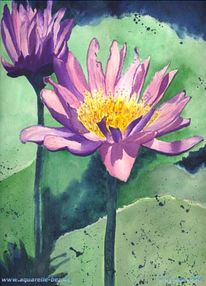 Blumen, Grafik, Seerose, Wasser