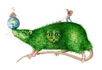 Ratte, Figur, Aquarellmalerei, Skurril