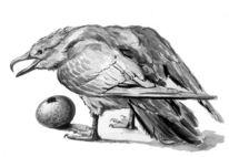 Raubmöwe, Tuschmalerei, Naturstudie, Naturstudien