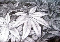 Zeichnung, Ahorn, Tuschezeichnung, Schraffur