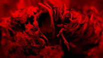 Abstrakt, Fotografie, Blumen, Kunstwerk