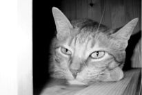 Fotografie, Dunkel, Katze, Pinnwand