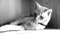 Pinnwand, Schrank, Katze