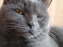 Tiere, Katze, Augen, Schau