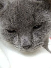 Tiere, Katze, Pinnwand, Nachdenklich