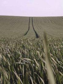 Landschaft, Fotografie, Blickwinkel