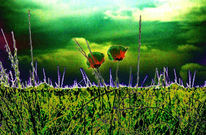 Surreal, Digital, Mohn, Landschaft