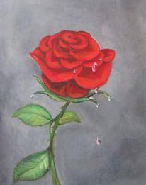 Blumen, Rose, Wasser, Tropfen