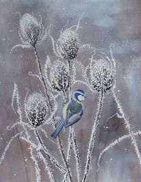 Winter, Distel, Fink, Blaufink