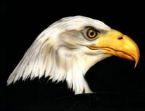 Tiere, Portrait, Adler, Airbrush