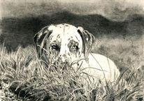 Haustier, Dalmatiner, Zeichnung, Hund