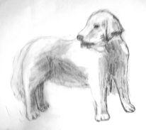 Retriever, Zeichnung, Hund, Skizze