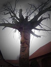 Stillleben, Baumwurzel, Lächeln, Baum