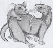 Tiere, Zeichnung, Ratte, Intimität