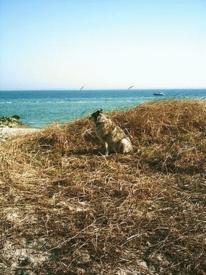 Sonne, Gefühl, Hund, Meer