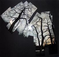 Konzept, Winter, Perspektive, Baum