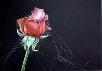 Zeichnung, Zeichnungen, Stillleben, Rose