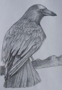 Zeichnung, Zeichnungen, Rabe