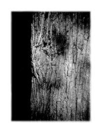 Landschaft, Fotografie, Alter, Greis