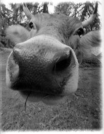 Tiere, Fotografie, Nahaufnahme, Kuh
