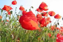Himmel, Rot, Fotografie, Blumen