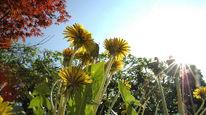 Blumen, Sonne, Landschaft, Himmel