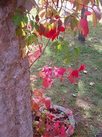 Fotografie, Landschaft, Herbstfarben