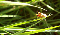 Gras, Fotografie, Insekten, Sonne