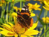 Blüte, Sommer, Schmetterling, Freude