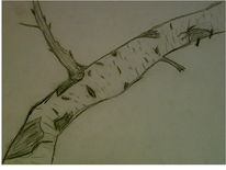 Skizze, Zeichnung, Zeichnungen, Baumstamm