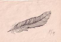 Feder, Zeichnung, Zeichnungen