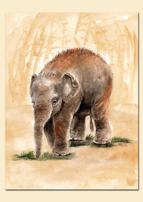 Zoo, Baby elefant, Indisch, Baby