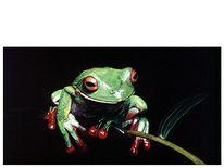 Augen, Naturstudie, Figural, Frosch