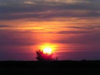Fotografie, Busch, Sonnenuntergang