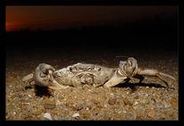 Sand, Fotografie, Abend, Krabbe