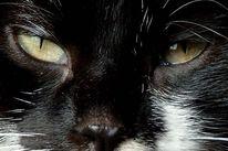 Fotografie, Augen,