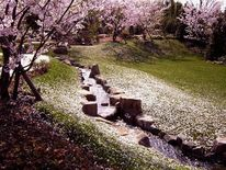 Fotografie, Kirschblüte, Landschaft, Japanisch