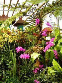 Fotografie, Orchidee, Tropen, Palmen