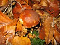Wald, Herbst, Landschaft, Pilze
