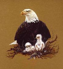 Adler, Weißkopfseeadler, Malerei